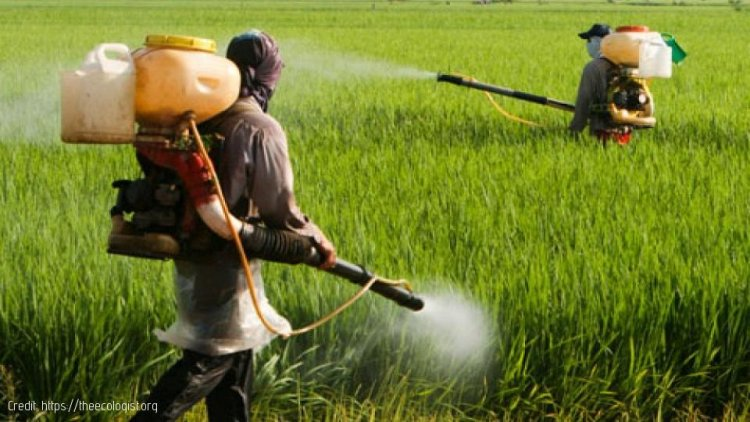 Roundup and the Cancer risks to Farm Workers