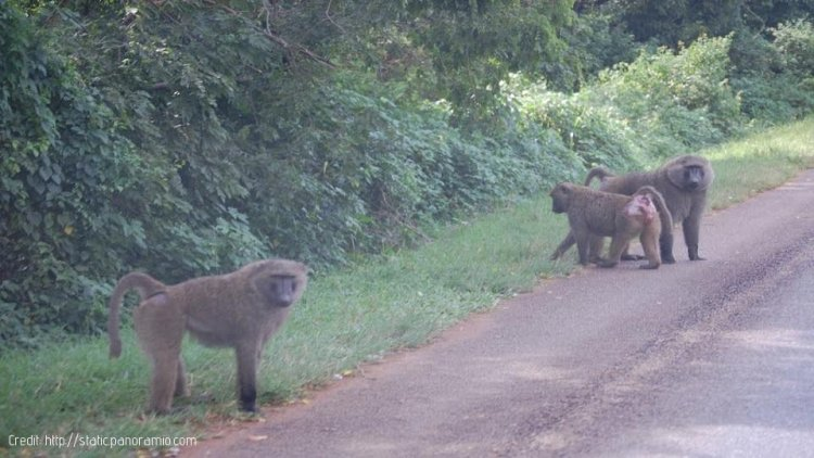 Uganda: Oil Roads Likely to Affect the Environment
